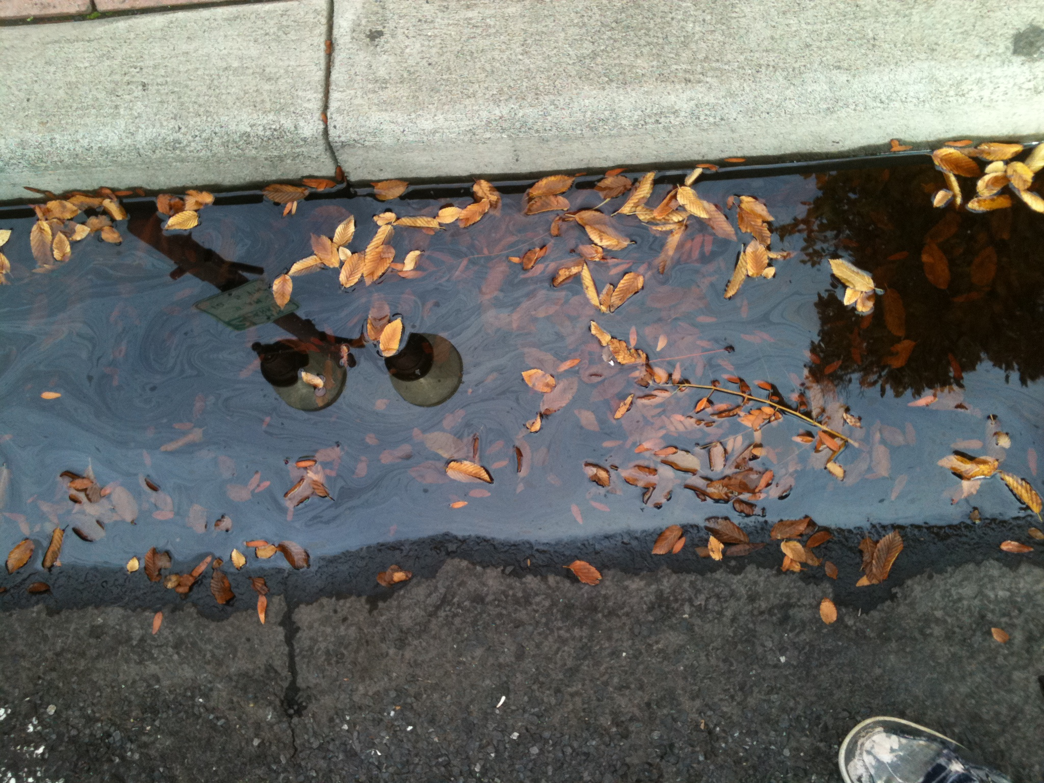 Leaves in gutter