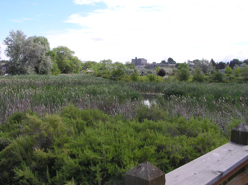 3 Ponds Wetland from Division viewing platform